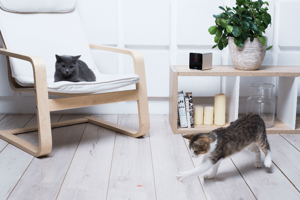 Petcube-Camera-cats-play-2