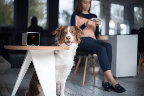 Petcube_Camera-dog-stool